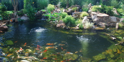 The Leading Fishpond and Water Garden Installation Services